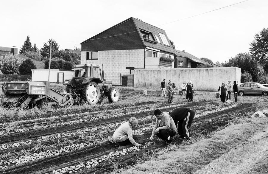 """""""Stoppeln"""" auf einem Kartoffelfeld in Gelsenkirchen."""